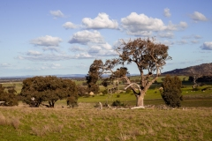 Mount Rothwell research and conservation centre in Victoria, Australia.
