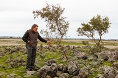 Tim Hill, general manager of Tiverton Farm, observes remnant type of trees which he hopes planting more of on Tiverton Farm, Victoria, Australia