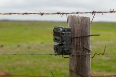 A motion sensor triggered camera used to survey potential predators invasion on Tiverton Farm, Victoria, Australia.