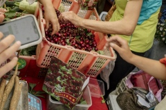 God's Grace Farm selling organic cherries at the Beijing Farmer's Market.