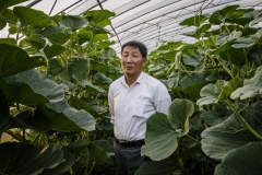 """Ma Jinzhong, Technician of Shared Harvest, 67 years old, from Shandong Province. He joined Shared Harvest in 2013, and is now overseeing all the greenhouses on the Pear Garden Farm. When he just started farming in 1970, he said there was no fertilizer or pesticide. Farmers started using Ammonia in 1975, and a few years later, urea fertilizers. Since joining Shared Harvest in 2013, he learned about organic farming, and found it quite similar to the way he farmed when he was 18. """"We used cow manure before, and we use it now. I'm going back to how I worked in the beginning."""""""