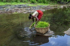 Women works in the field of Kahansingh Bhai in Sankdi village in Narmada district in Gujrat.