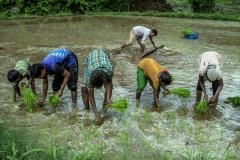 Men & Women works in the field of Kahansingh Bhai in Sankdi village in Narmada district in Gujrat.