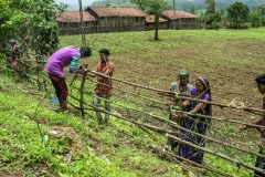 Men & Women works on the fencing of their  fields at Sagai forest villages in Narmada district in Gujrat.