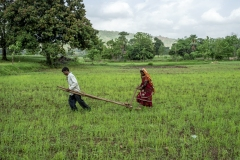 Men & Women works in the fields of  Sagai forest villages in Narmada district in Gujrat.
