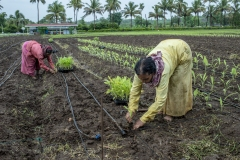 Workers work in R&D fields of Jain Irrigation in Jalgoan