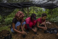 Women community members put soils on polybags for new seedlings at a nursery at the Cinta Raja Rainforest Restoration Site in Gunung Leuser National Park (GNLP) in Sumatra, Indonesia.