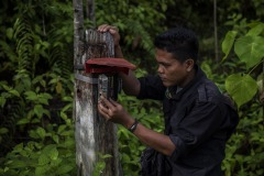 A field worker checks battery level of a camera trap at the Cinta Raja Rainforest Restoration Site in Gunung Leuser National Park (GNLP) in Sumatra, Indonesia.