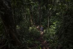 A farmer walks back to his traditional boiling station after collecting the sap at a forest in Sintang regency, West Kalimantan, Indonesia.