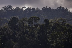 View of a forest in Sintang regency, West Kalimantan, Indonesia.