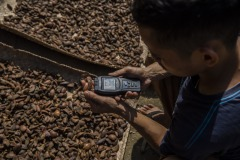 A worker uses a moisture meter to check the level of moisture of sun-dried ilipe nuts before packing them into sacks at a village in Sintang regency, West Kalimantan, Indonesia.