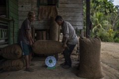Farmers pack sun-dried ilipe nuts into sacks before weighing them at a village in Sintang regency, West Kalimantan, Indonesia.