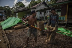 Workers pour sun-dried ilipe nuts into a sack at a village in Sintang Regency, West Kalimantan, Indonesia.