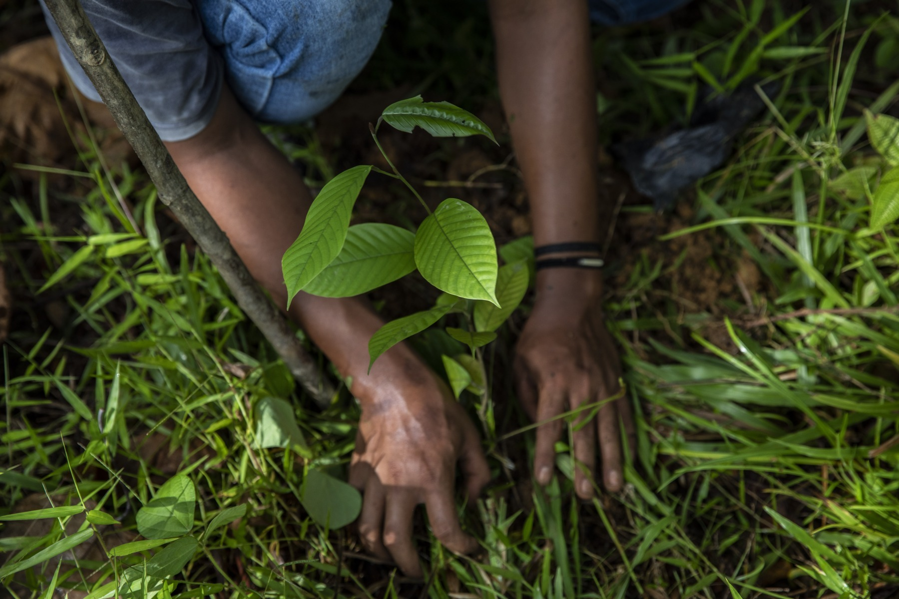 Three ways the G7 can help achieve sustainable land use and trade